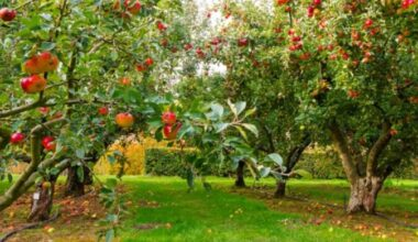 best place for fruit tree e1612693507456