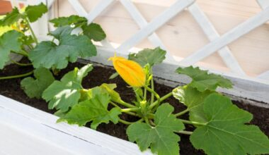 courgettes raised bed e1612949452615