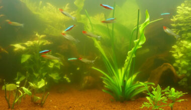 fish water for plants e1614682456191