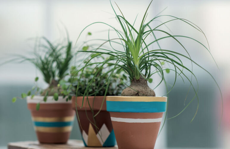 plants for clay pots