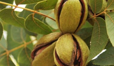 plant pecan tree from seed e1618310583753