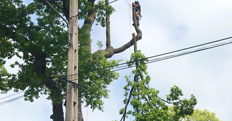 tree power line e1617619175798
