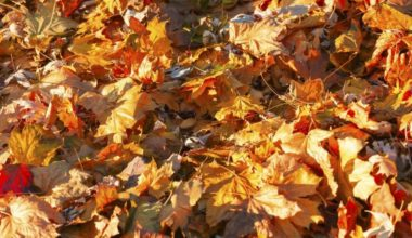 get leaves out of bushes e1621598204910