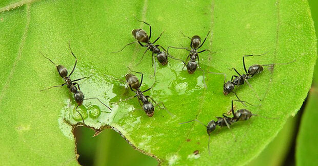 get rid of ants e1620292331575