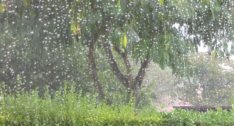 planting in the rain e1621784446942