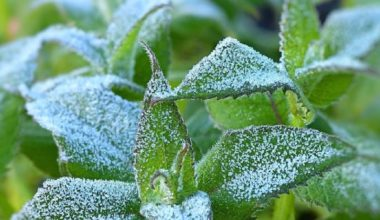 protect plant in container frost e1621598066950