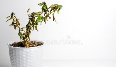 revive wilted plant e1620210138775
